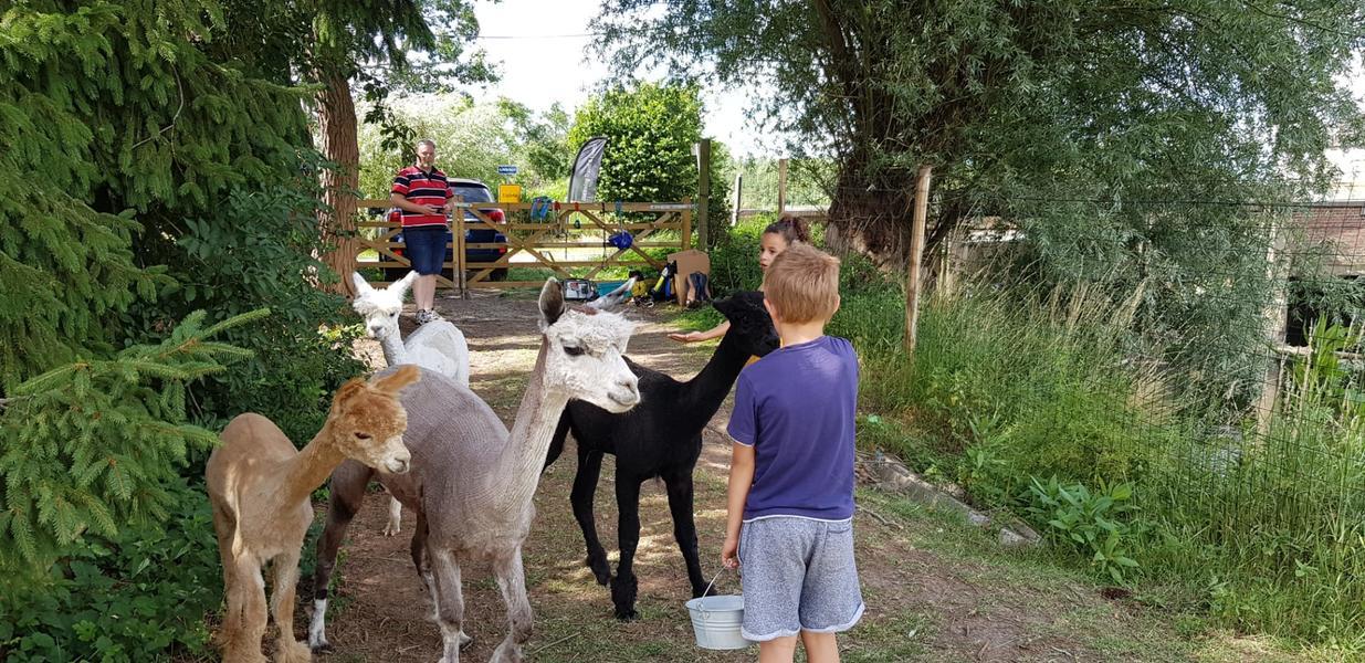 Heerlijk kamperen vlak bij onze Alpaca's in een rustige omgeving. #8