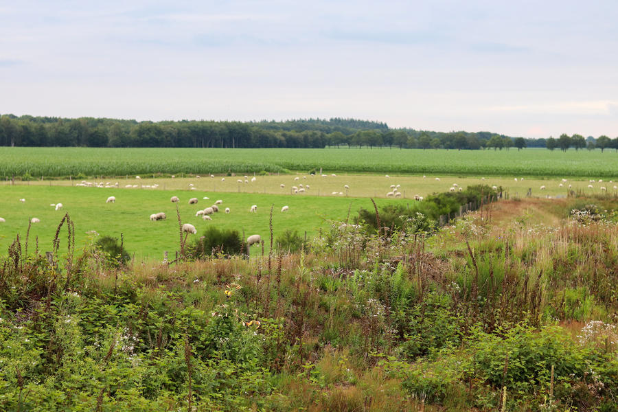 Nice and free camping on the border of Drenthe-Friesland-Groningen #6