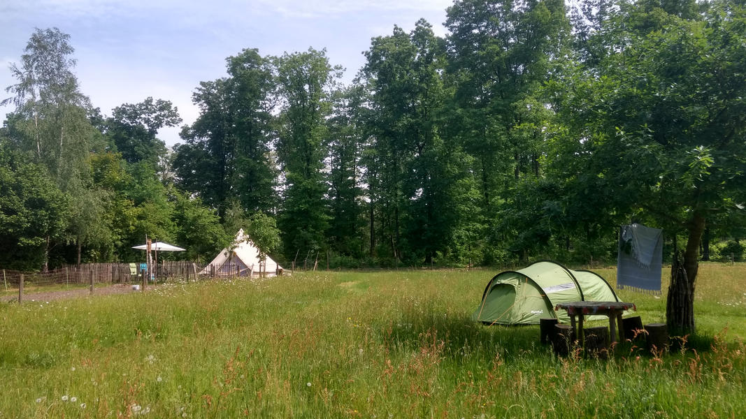 Idyllic campsite near the forest #1