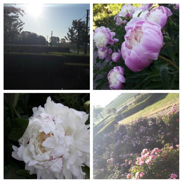 prachtige tuin in rustig dorp niet ver van Brugge; mooie natuur #1
