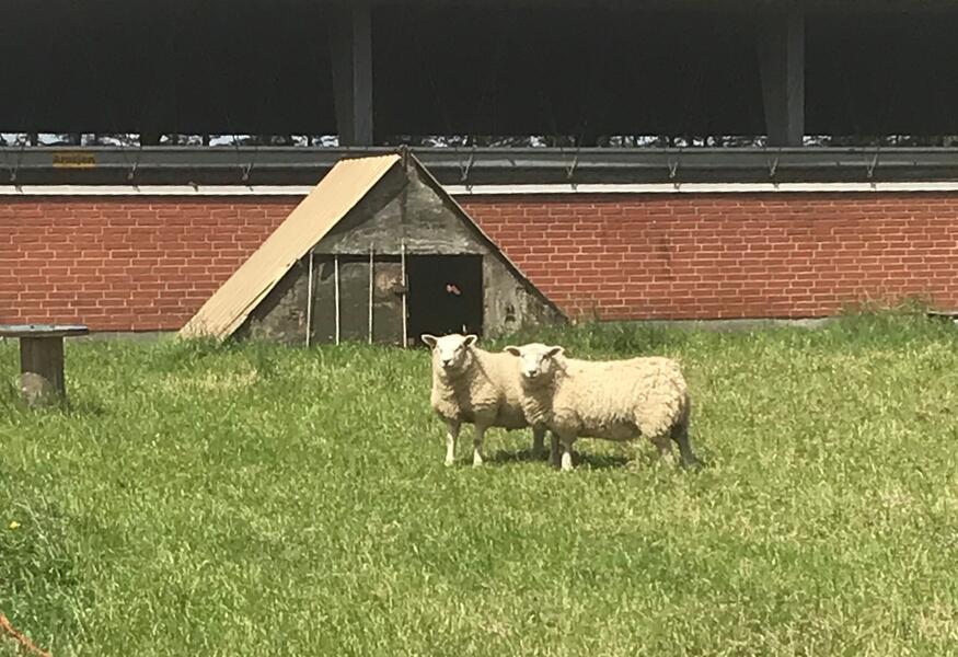 On the farm in Denmark #1